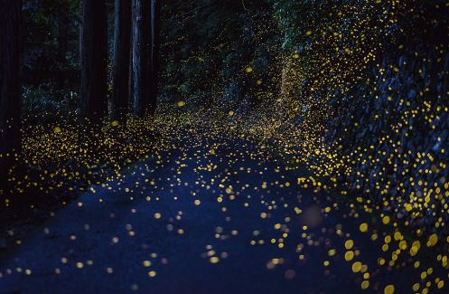 Fireflies at night