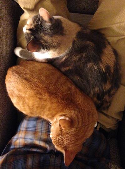 Cats in Robert's lap